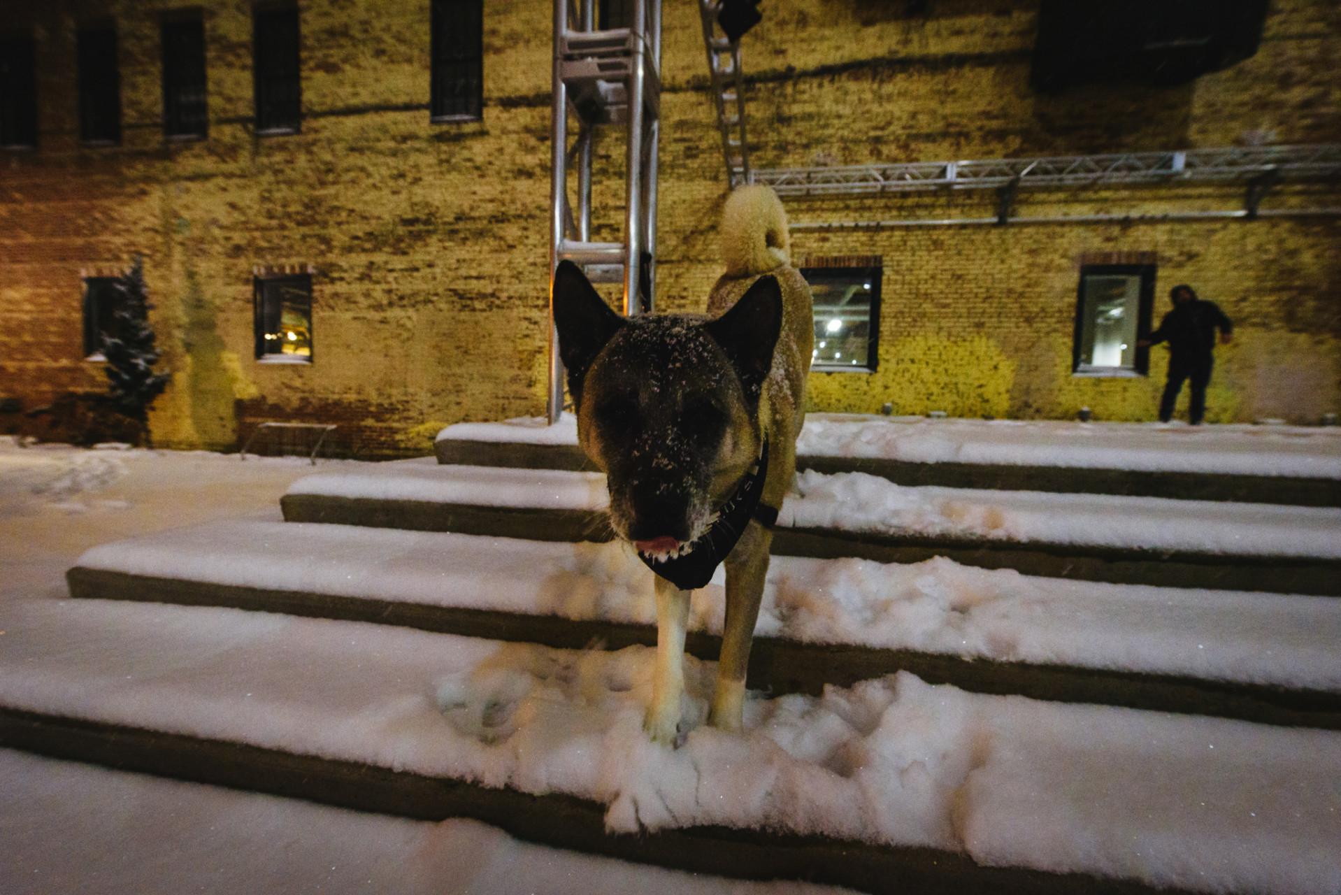 Snowstorm_GARFINKEL-11
